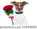 valentine dog 35940694