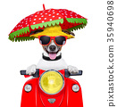 motorcycle dog summer dog 35940698