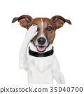 hiding covering eye dog 35940700
