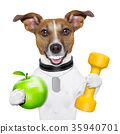 fitness and healthy dog 35940701