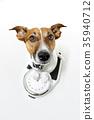dog on scale 35940712