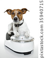 dog on scale 35940715