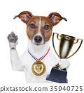 winner dog 35940725