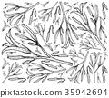 Hand Drawn of Fresh Daylily Plants Background 35942694