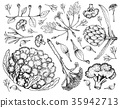 Various Vegetables on A White Background 35942713