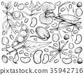 Podded Vegetables on A White Background 35942716