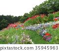 녹색, 공원, 꽃밭 35945963