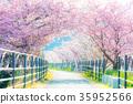 河津樱 樱花 樱桃树 35952566