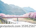 河津樱 樱花 樱桃树 35952567