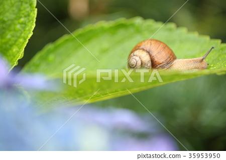 snails 35953950