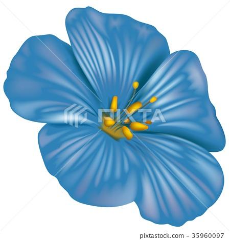 Blue Anemone Flower 35960097