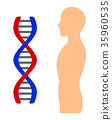 dna, person, humans 35960535