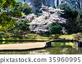 小石川後楽園花園 後樂園 櫻花 35960995