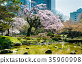 小石川後楽園花園 後樂園 櫻花 35960998