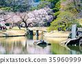 小石川後楽園花園 後樂園 櫻花 35960999