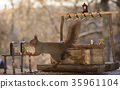 squirrel standing with a bar and Slot Machine 35961104