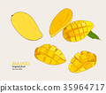 set of mangoes.hand draw sketch vector. 35964717