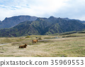 cow, cattle, cows 35969553
