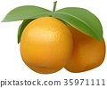 Tangerine Fruit Leaf 35971111
