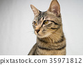 나쁜 얼굴 고양이 35971812