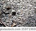 蜥蜴 爬行動物 爬蟲類的 35971969