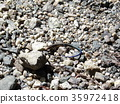 蜥蜴 爬行動物 爬蟲類的 35972418