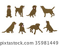 Animal dog Labrador character icon set in flat 35981449