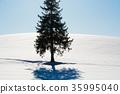 비 에이, 설원, 나무 35995040