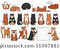 สุนัข,สุนัช,หมาชิบะ 35997883