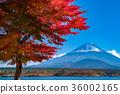 富士山 36002165