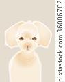dog, dogs, doggy 36006702