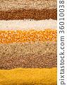 穀類 玉米 穀物 36010038