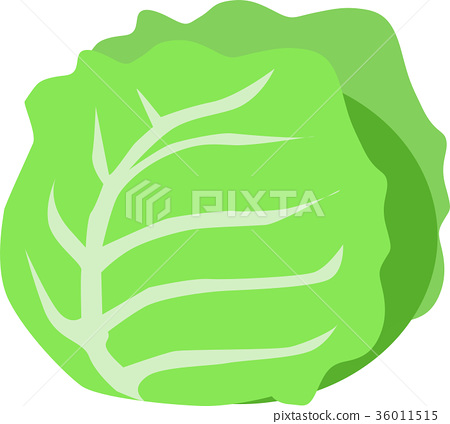 cabbage 36011515
