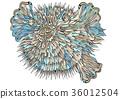 pufferfish 36012504