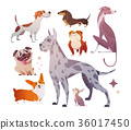 Cartoon dogs of different breeds and sizes. 36017450
