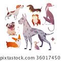 dog puppy animals 36017450