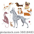 Vector illustration, set of funny purebred dogs 36018483