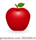 apple vector fruit 36026614