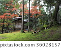 Autumn scenery of Wakasa Shrine 36028157