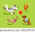 노는 강아지들 36029544