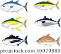 tuna, yellowtail, paper craft 36029880