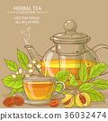 herb, nutmeg, vector 36032474