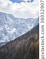 Autumn forest and snowy mountains 36032907