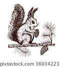 Christmas squirrel and animal with fir-cone in the 36034223