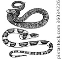 Viper snake. serpent cobra and python, anaconda or 36034226