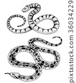 Viper snake. serpent cobra and python, anaconda or 36034229