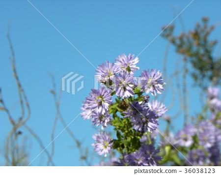 ดอกไม้,ฤดูใบไม้ร่วง 36038123