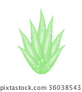 Aloe Vera a very useful herbal medicine. 36038543