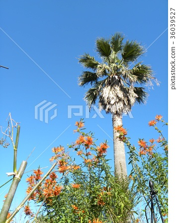 꽃, 플라워, 적색 36039527