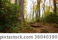 autumn, autumnal, forest 36040390